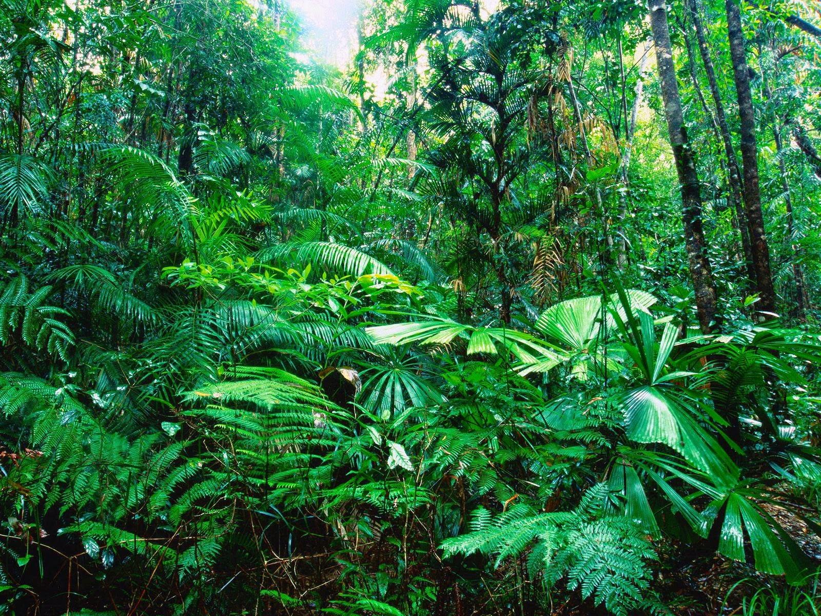 2015 03 22 Plantas tropicales interior