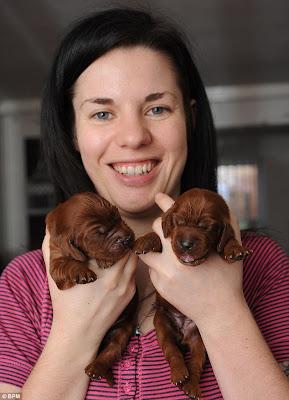 3 Σκυλίτσα γέννησε όχι 1, όχι 2 αλλά 15 κουταβάκια!   Δείτε φώτο