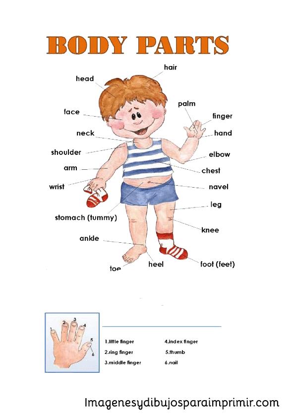 Los dedos de la mano en Inglés