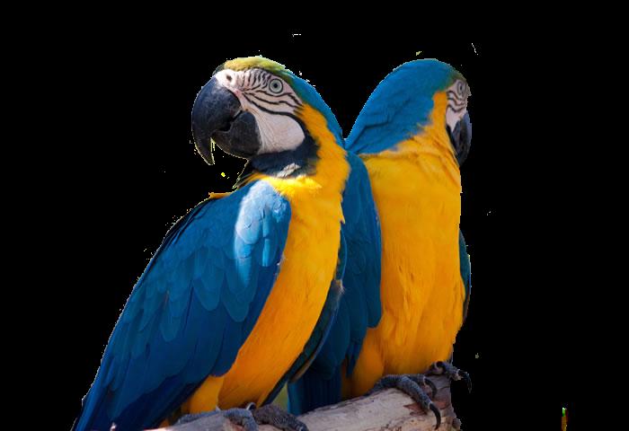 Proyecto Animales de mi Zoológico
