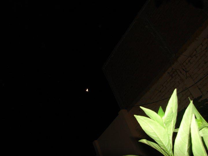 15-MAYO-2011 MARIPOSA ET Ovni Evolucion= Savacion
