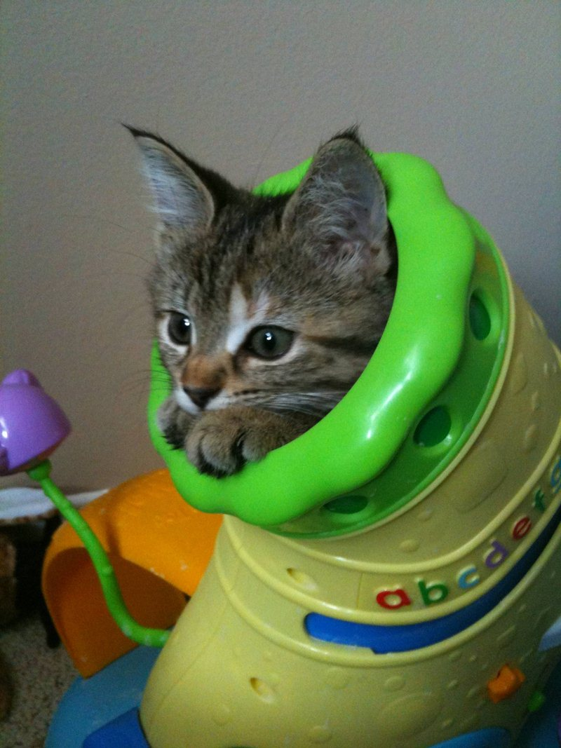 funny cat pictures, playing kitten