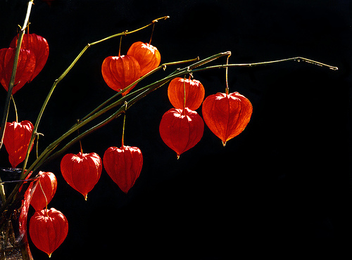 I fiori the season of branches and pods berries