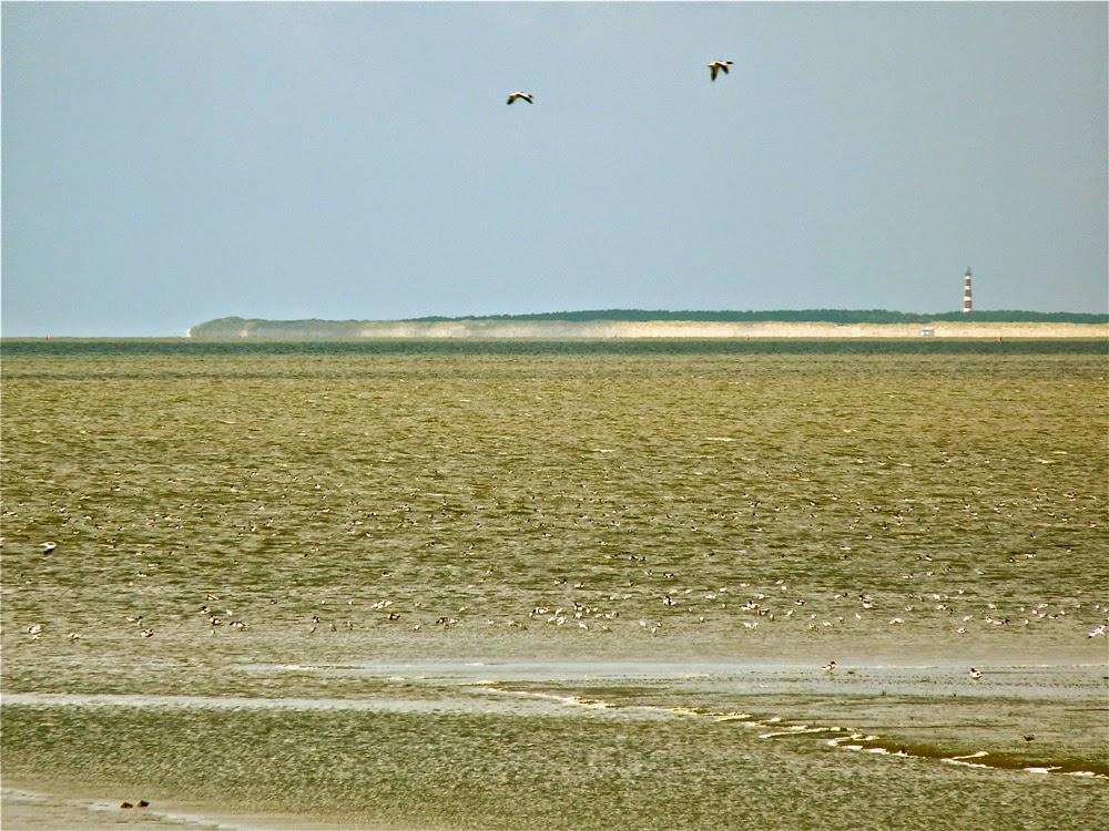 Ameland, gezien vanaf de dijk bij Zwarte Haan (Het Bildt, Friesland)