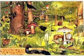 https://sites.google.com/site/rotes6a/c-medi/t-4-els-ecosistemes