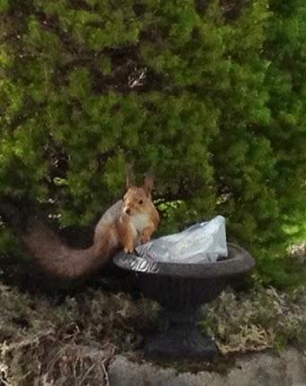 Pähkinöitä, nam!