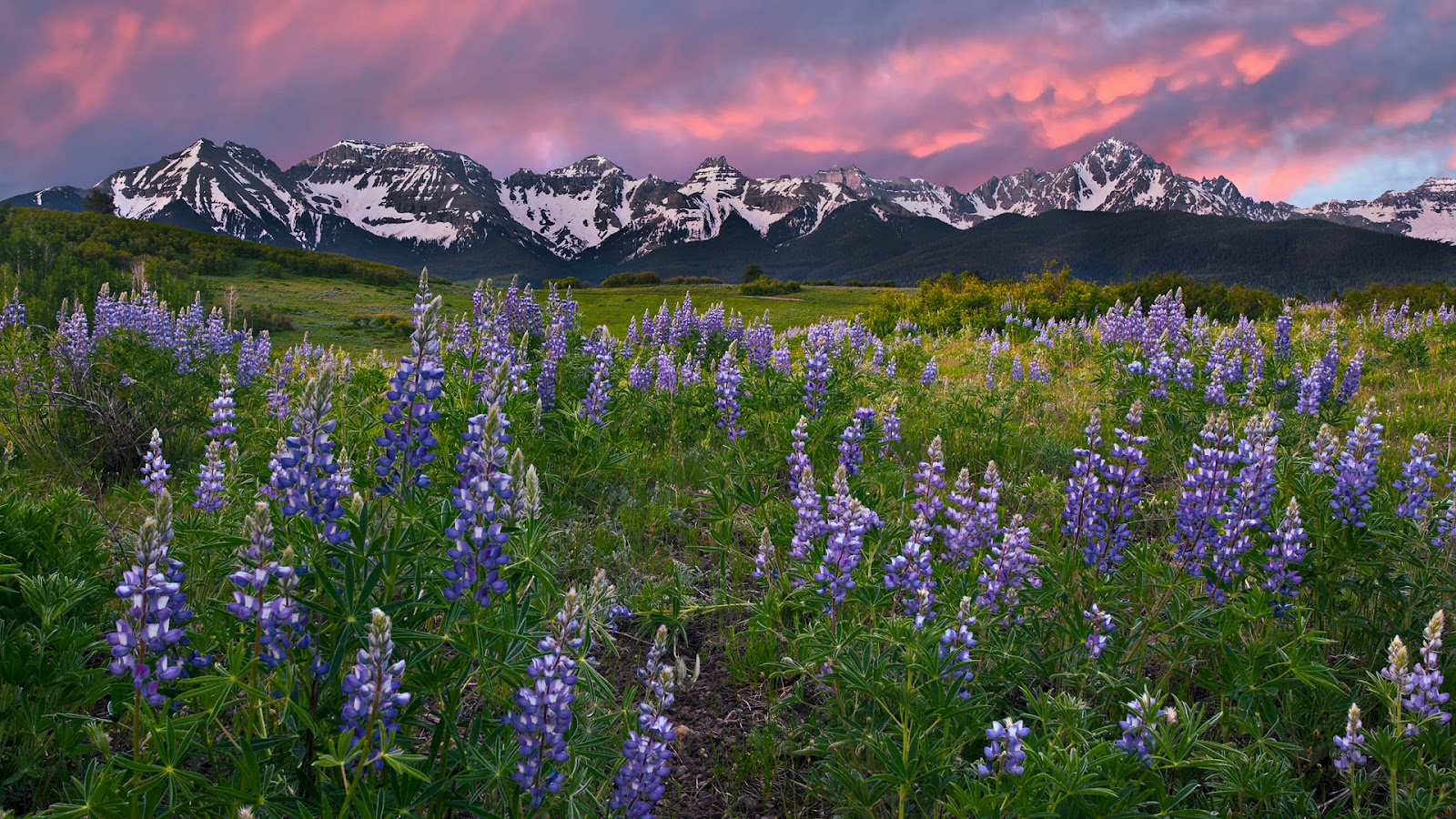 http://2.bp.blogspot.com/-MzF2LRtJcqM/UA1W_zYvVCI/AAAAAAAAATQ/n_s7XIrj-Ng/s1600/Alpine+Meadow,+San+Juan+Mountains,+Rocky+Mountains,+Colorado.jpg