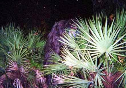 Skunk Ape Conference Florida