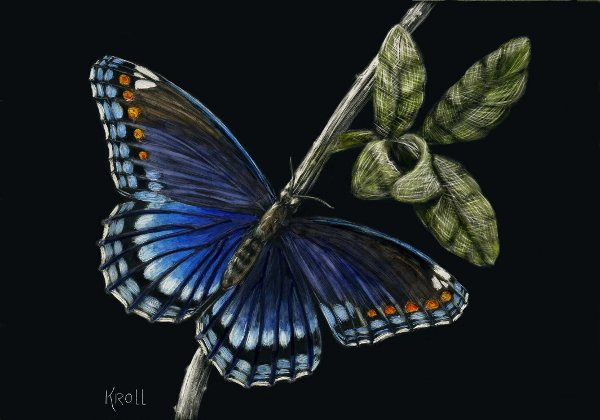 Butterfly scratchboard - photo#3