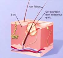 Process of acne formation