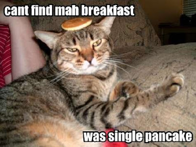 Cat funny picture
