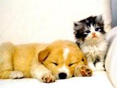 #22 Cute Animal Wallpaper