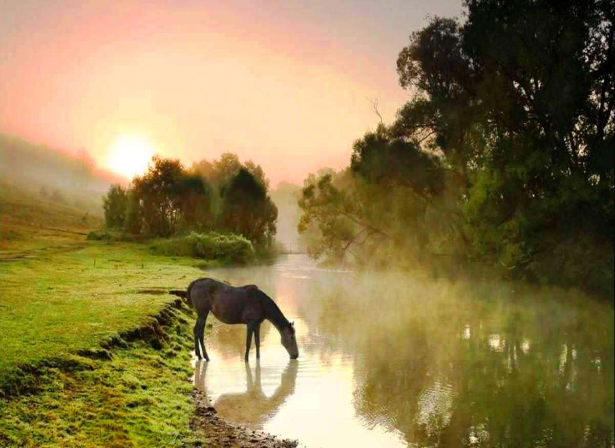 http://2.bp.blogspot.com/-N-2P5ftD_yE/TdfHZSeTwjI/AAAAAAAAFUg/WSB28zc0sAg/s1600/HorseDrinking.jpg
