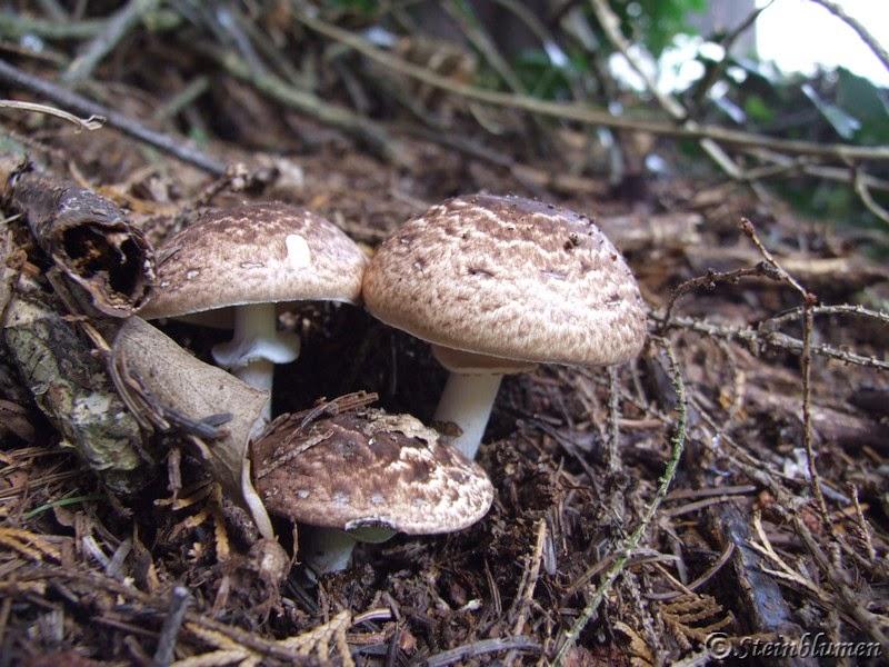 Sch ne pilze im garten - Gartendeko pilze aus stein ...