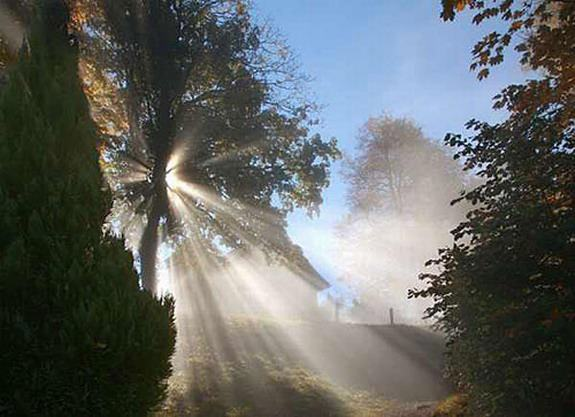 sunlight breaking through a tree