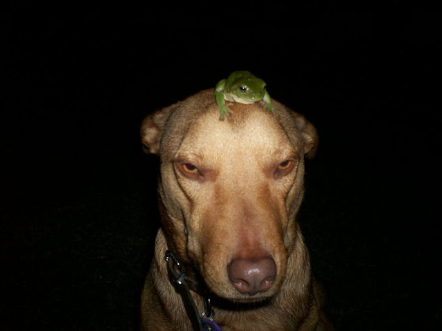 funny animal pictures, dog and frog on his head