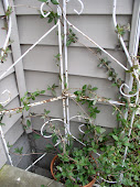 The trellis I made out of a vintage baker's rack