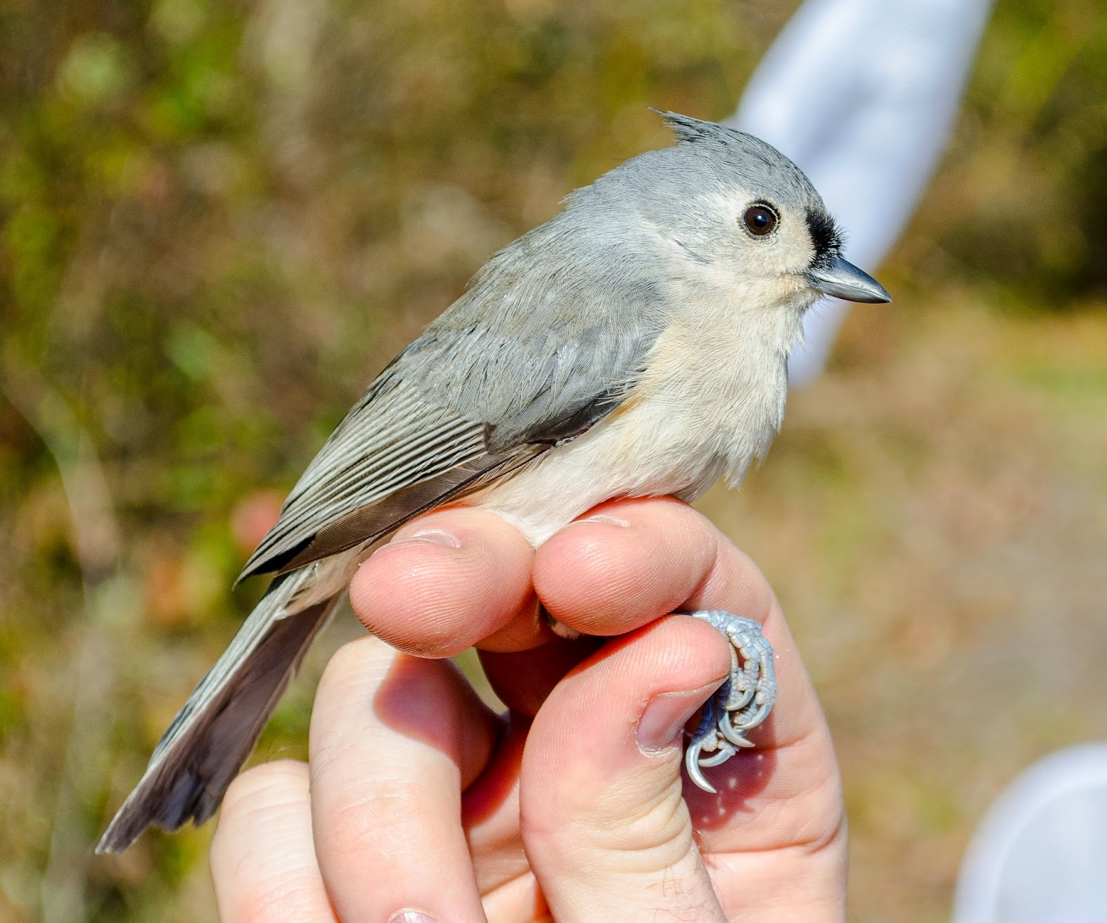 on the subject of nature bird banding