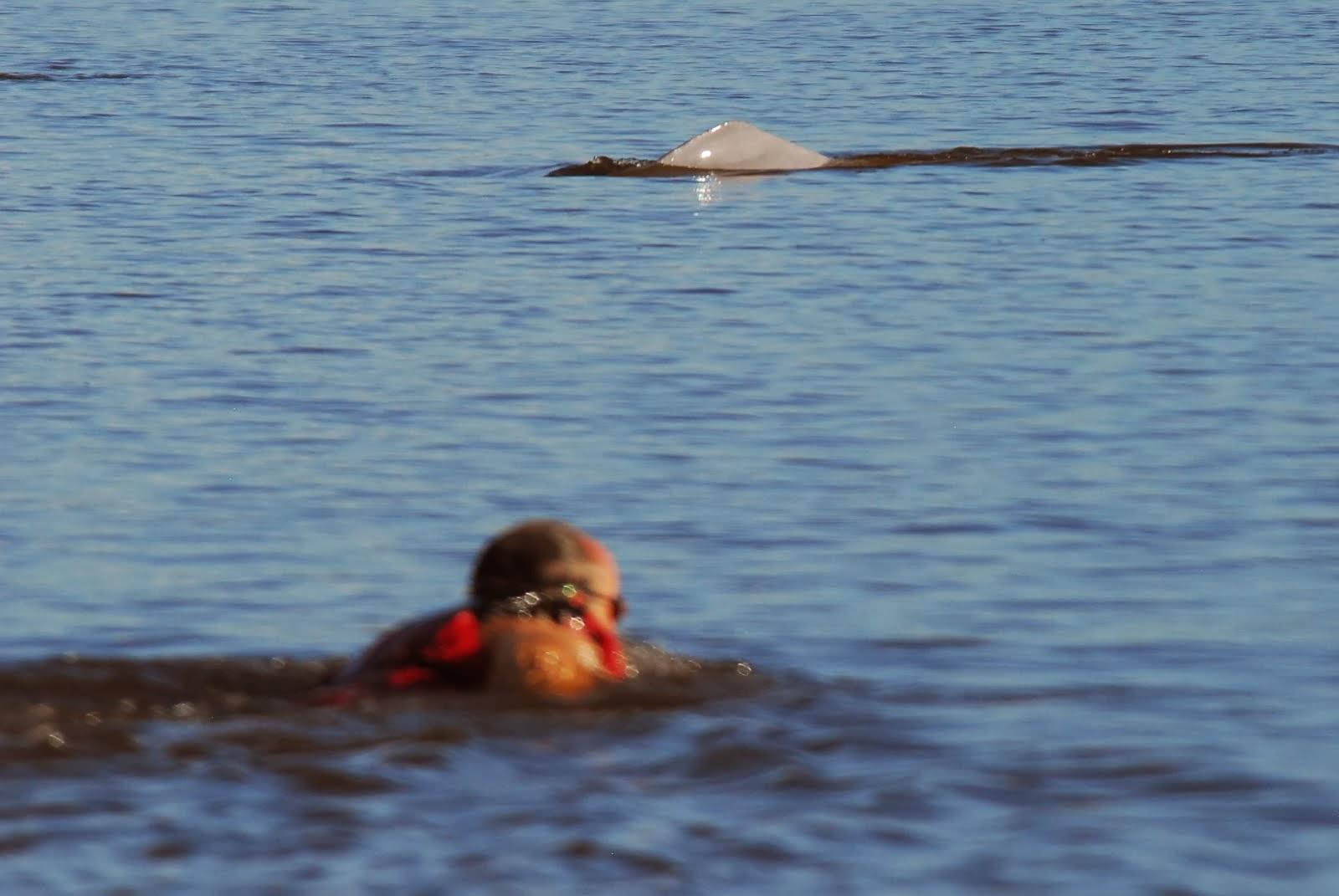 Nadando con DELFINES del AMAZONAS