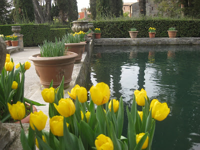 Yellow tulips near a fountain pool in the gardens of Villa D'Este