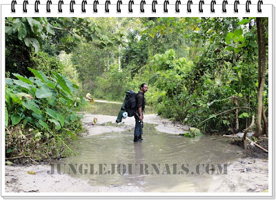 Jungle Camping Trip In The Wet Monsoon Season  Wetting My Boots