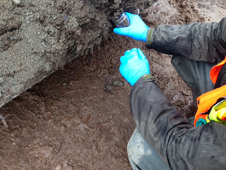 Technician collects soil sample in the excavated area.