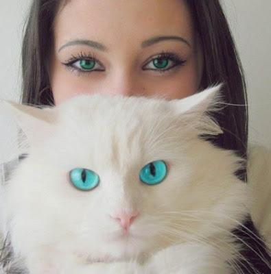 Ох уж эти кошки. Белая киска с голубыми глазами. Зеленоглазая красавица. Фото кошек.