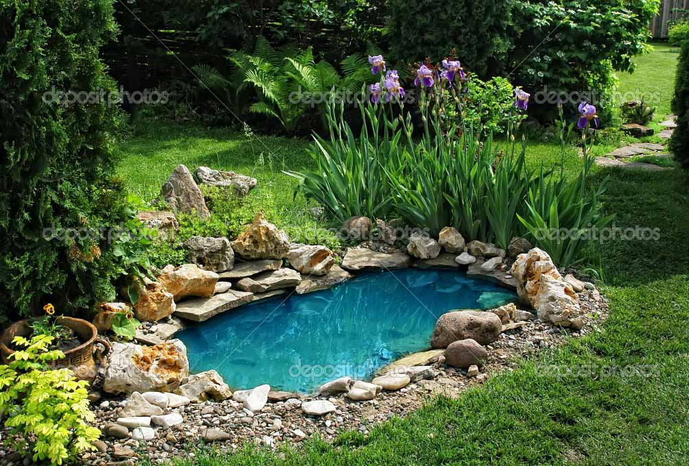 Backyard Koi Fish Pond images