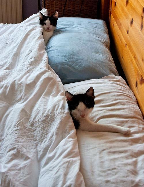 gatinhos dorminhocos