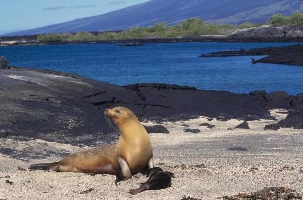 Galapagos Zwierzęta