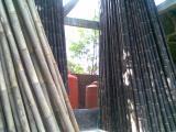 cara mudah mengawetkan bambu