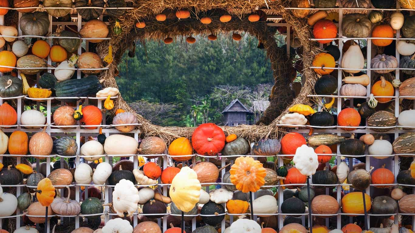 Colorful display of gourds, squash, and pumpkins in Nakhon Ratchasima, Thailand (© Shutterstock) 15