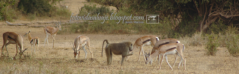 fotovidasalvaje.blogspot.com