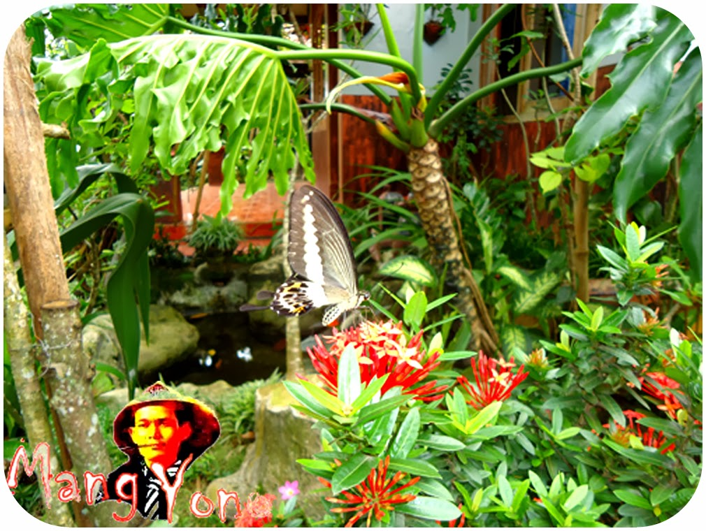 Keuntungan dan manfaat menanam Bunga, pohon atau tanaman di sekitar rumah kita.