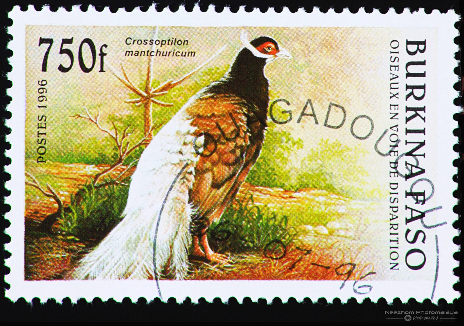 Burkina Faso 1996 Endangered Birds stamp - Brown Eared Pheasant (Crossoptilon mantchuricum) 750 f