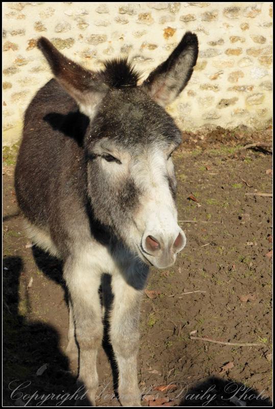 Donkey Queen's hamlet Versailles