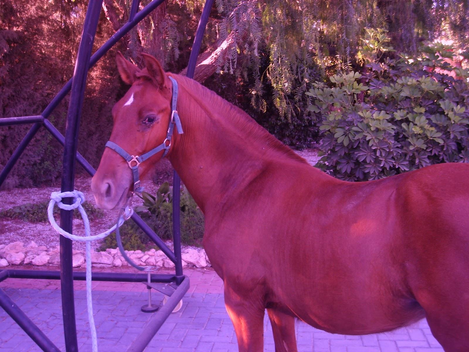 Los caballos de mi vida: Las capas