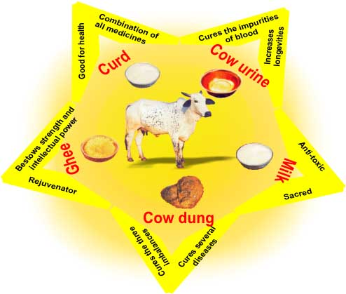 Why do Hindus Worship Cows - Panchagavya