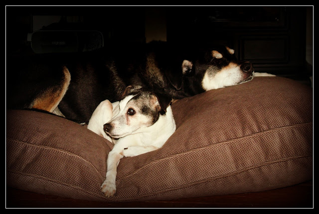 Dogs On Dog Beds