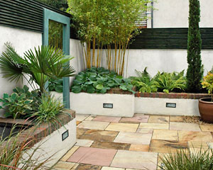 November 2011 landscape plant for Very small courtyard ideas