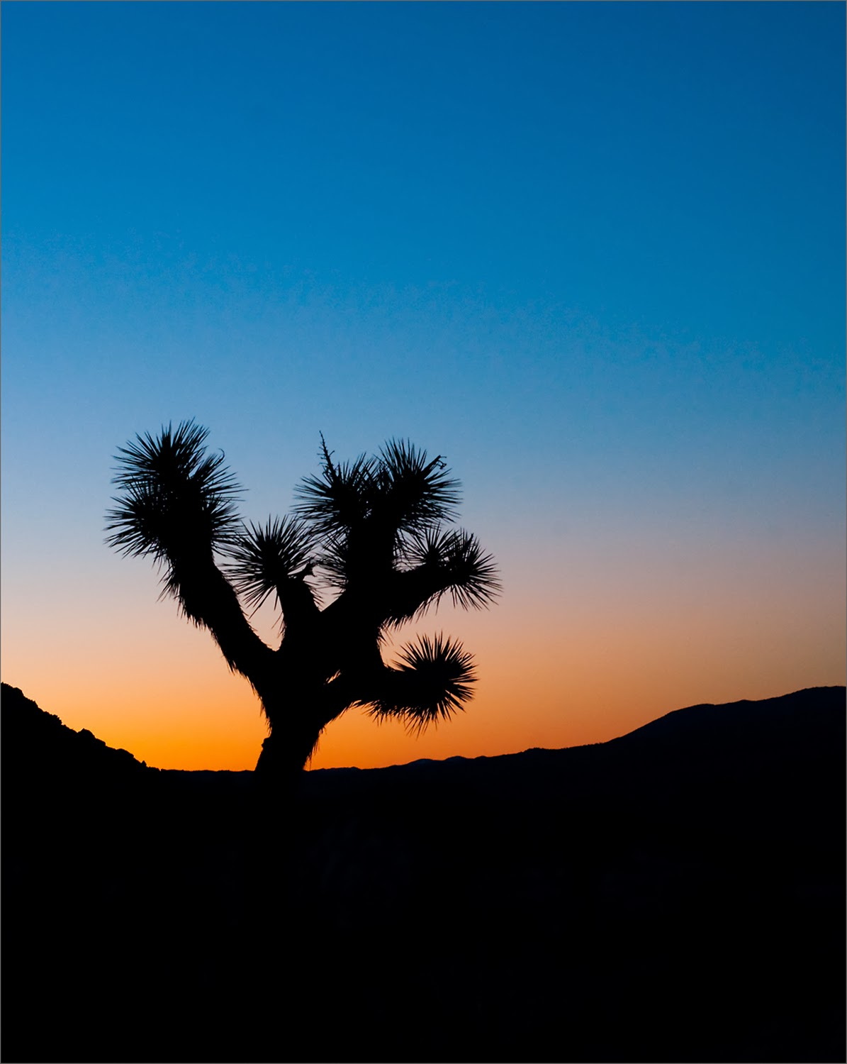joshua tree national park single guys Joshua tree national park is like no other place on earth,  barely big enough for a single tent and crammed in next to the road,.