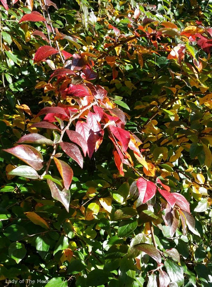 syksyn värit, autumn colours