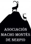 Asociación Macho Montés
