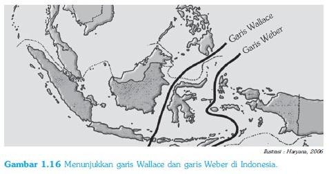 Garis webber dan wallace dalam Persebaran Hewan / fauna di Indonesia