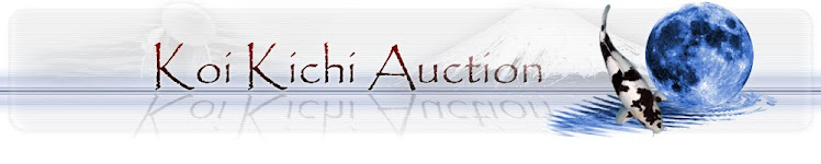Koi Kichi Auction