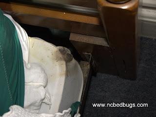 bed bug problem