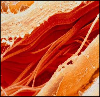 Makanan Harian Jika dilihat Dari Mikroskop Elektron
