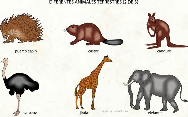imagenes de animales terrestres animados - MIS PROYECTOS: junio 2015