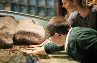 Ann Arbor Mom Blog Toledo Zoo Aquarium Grand Re Opening