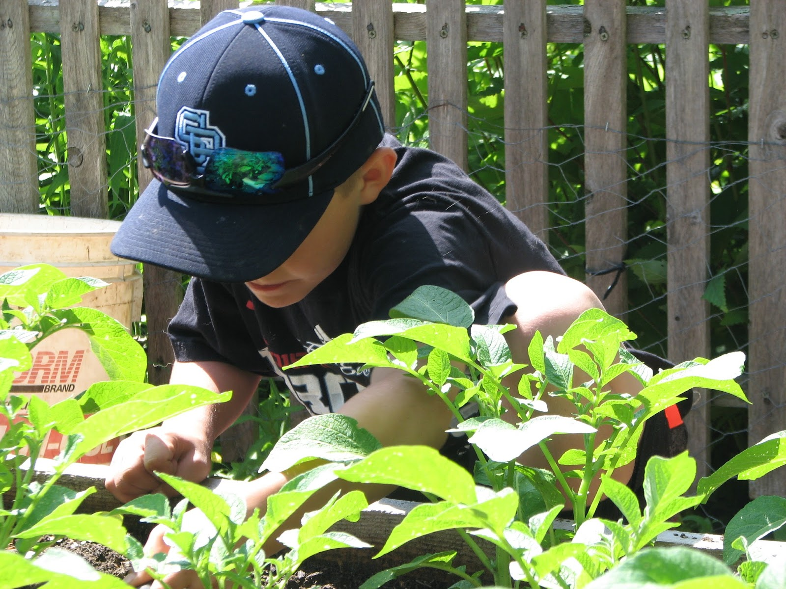 Growing young gardeners club pollinators and blooms for The gardener burlington